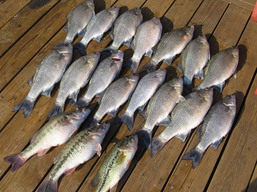 Trace Hollow Resort Fishing